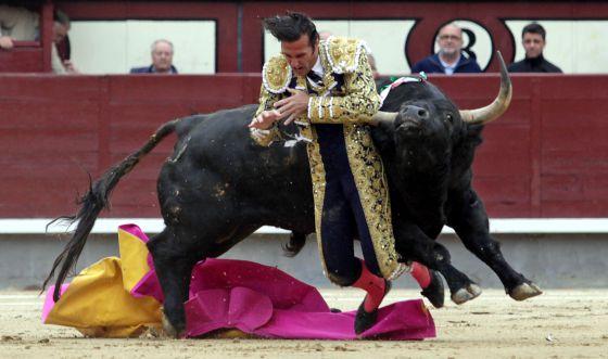 El torero David Mora es corneado por el primer toro en las Ventas. / Santi Burgos