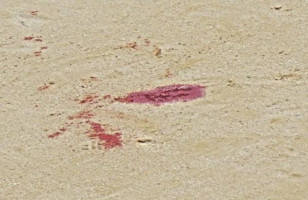 La sangre de David Mora
