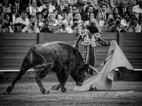 Antonio Ferrera. Foto Arjona.