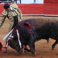 """Enrique Ponce: """"Había pensado torear en la Plaza México un mano a mano con Joselito Adame a beneficio."""""""