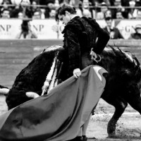 Solo para Villamelones: Elauténtico toro de lidia está en crisis.