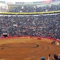 Un festejo Guadalupano de diferentes matices en La México