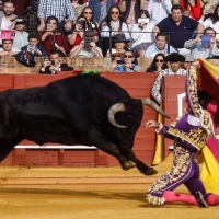 Adiós a la Feria de Sevilla: Miura, y échate a correr...
