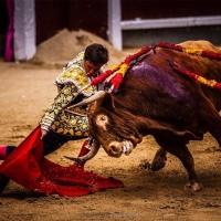San Isidro: 'Licenciado', hermano de 'Orgullito'