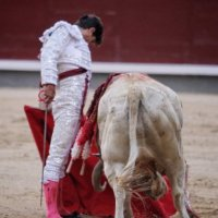 El cordón umbilical: El Toro en México - Por el Bardo de la Taurina.
