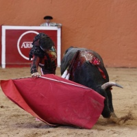 No todo esta perdido:  Roberto Román, el novillero que México estaba esperando