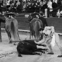 Fallas 2019: 'Horroroso', un toro sublime, a punto de indulto