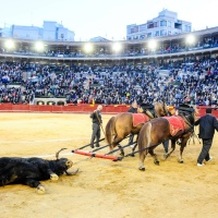 Fallas 2019: 'Horroroso', un gran quinto toro de Jandilla, para el que se pidió el indulto