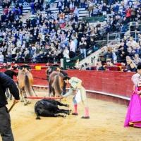 "Fallas 2019: ""Horroroso"" un nombre que no le hizo justicia"