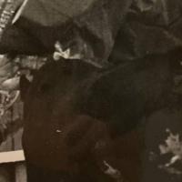 Julio Robles, los diez días antes de la tragedia de Béziers