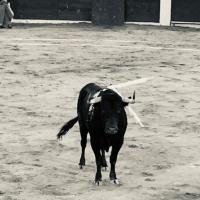 2ª Corrida de Feria en San Luis Potosí: Una Ficción...