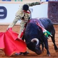 Juriquilla: Tarde triunfal de Sergio Flores con un buen encierro de Begoña