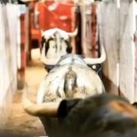 Así fue el esperado desembarque de los toros de Begoña en la Plaza México.