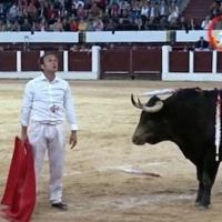 Opinión: Hay toro y hay torero.