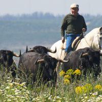 """Cuadri: """"Se nos juntan dos camadas y habrá que mandar toros al matadero"""""""