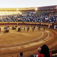 España: La tauromaquia vs el director general de Derechos de los Animales.