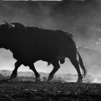 Opinión: Toros en Zacatecas para el presente mes.