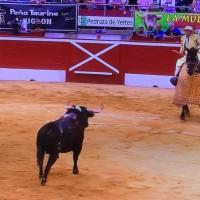 🇨🇵 Mont de Marsan: El deslumbrante reinado del toro
